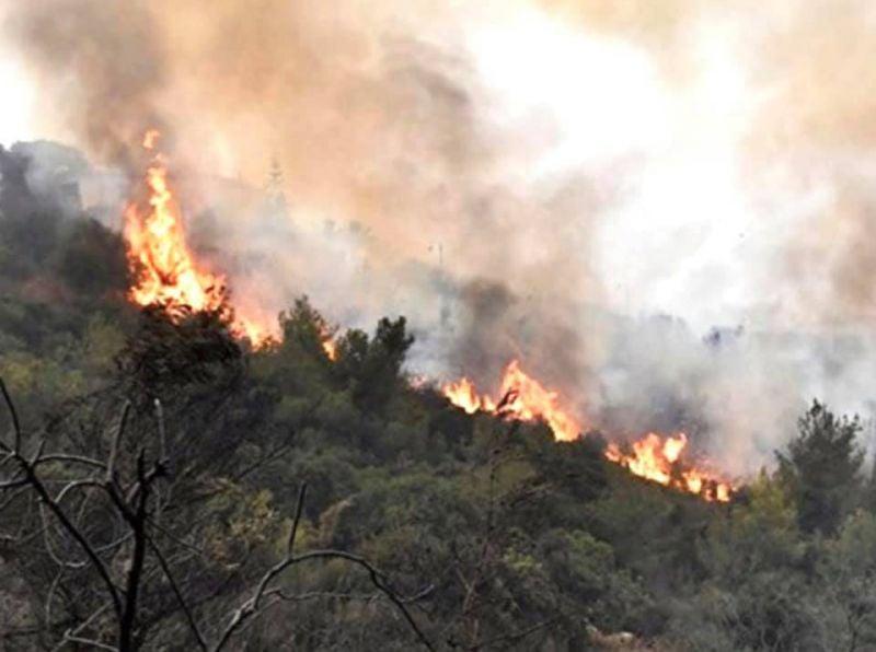 Les forêts du Akkar brûlent depuis des jours dans l'indifférence totale