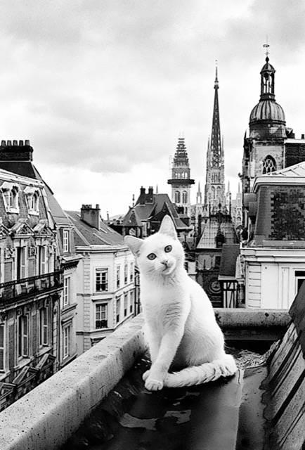 Baudelaire et les chats