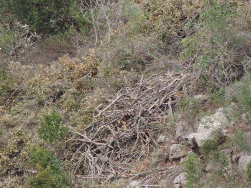Abattage d'arbres à grande échelle dans le Kesrouan