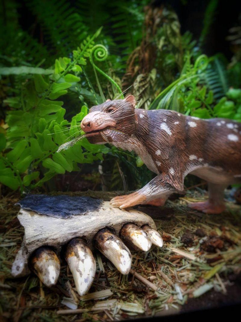 Découverte au Chili des restes d'un nouveau mammifère vieux de 72 millions d'années