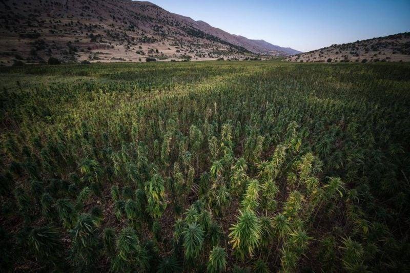 La Grèce saisit quatre tonnes de cannabis dans une cargaison en provenance du Liban