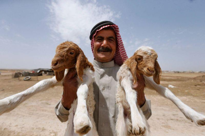 En Syrie, le bétail est en danger, et pas seulement à cause des jihadistes
