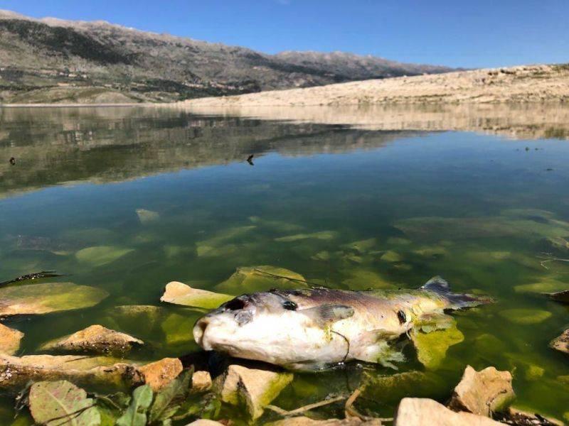 Cent vingt tonnes de poissons morts retirées du lac Qaraoun