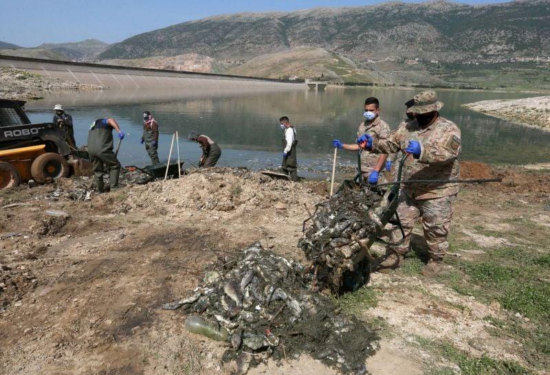Hécatombe de carpes au lac Qaraoun: plusieurs scénarios, pas encore de réponse claire