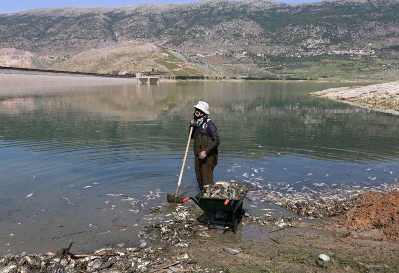 Hécatombe du Qaraoun: un lourd bilan de deux cents tonnes de poissons morts