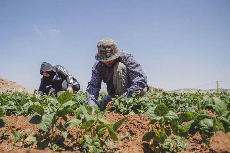 Un programme de l'ONU et de l'UE pour une agriculture responsable