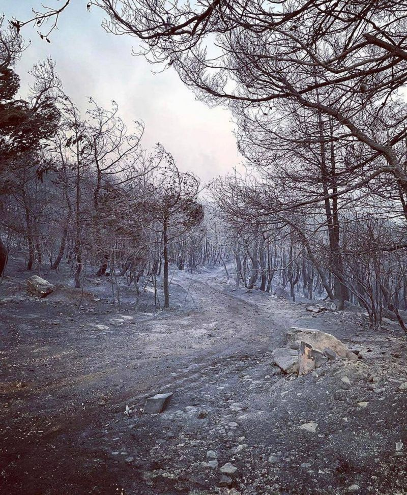 Face aux feux qui ravagent le Akkar, les autorités plus incapables que jamais