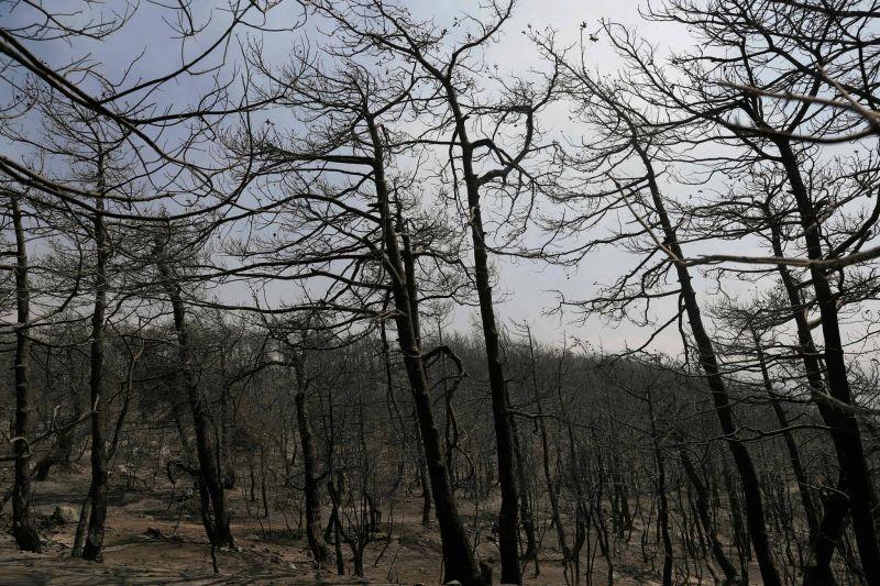 Incendies dans le Akkar : la situation
