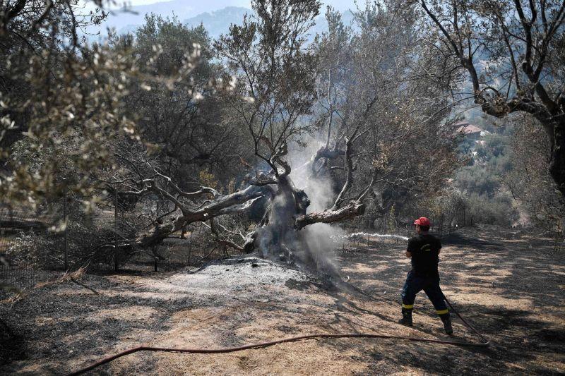 Les incendies font rage dans le sud de l'Europe, villageois et touristes évacués