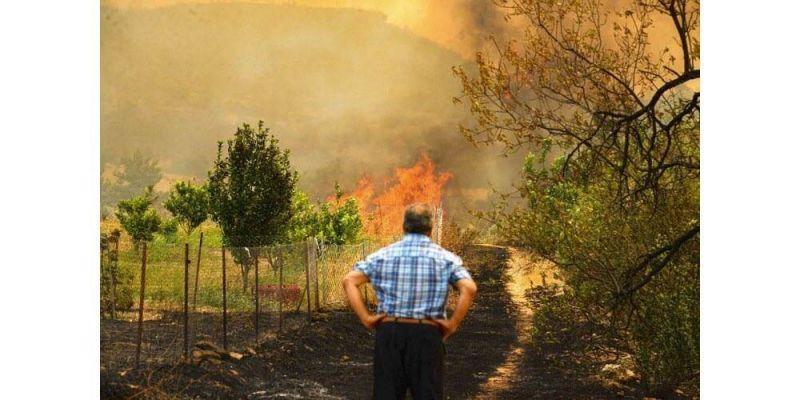 La majorité des feux de forêt ravageant le sud du pays maîtrisés
