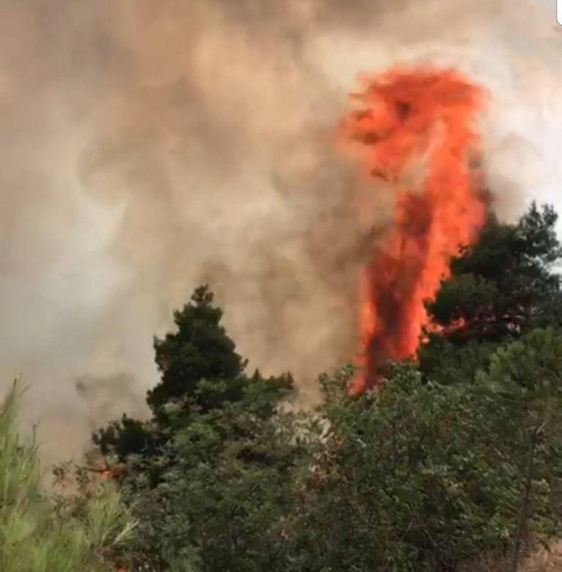 Après plusieurs heures de lutte, un incendie maîtrisé dans des bois de pins à Aandqet