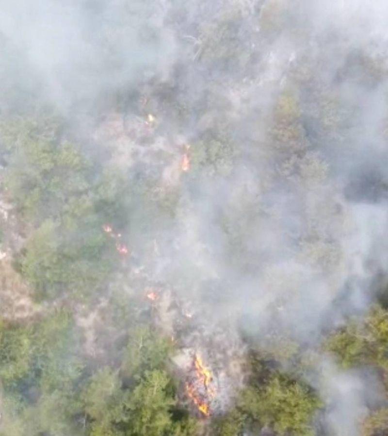 «Fire Patrol», une application pour lutter contre les feux de forêt
