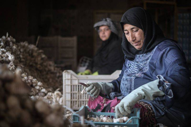 Exportations vers l'Arabie: les agriculteurs libanais croulent sous les dettes et les stocks