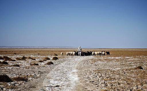 L'Iran achète un volume record de blé après la pire sécheresse depuis 50 ans